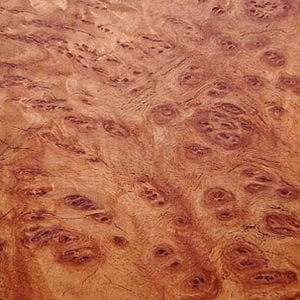Coolibah Burr - Exotic Hardwoods UK